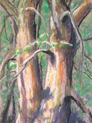 """Tree Tango"""